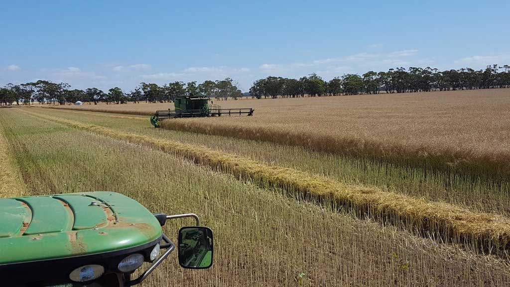 How farmer using chaff decks in their weed battles